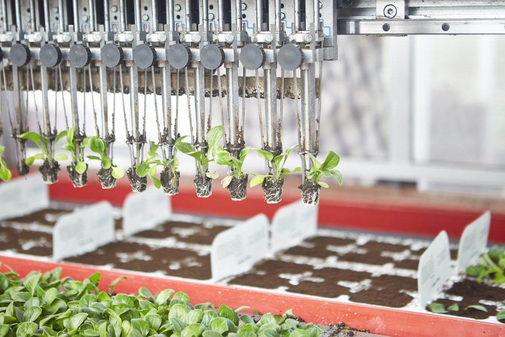 Automated robot planting shoots